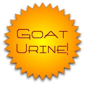 goat urine (mac)